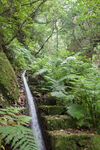 Beutyinnatu Levadawalk Madeira Madeiraisland Naturelovers Stepstoheaven Trekking TrekkingDay