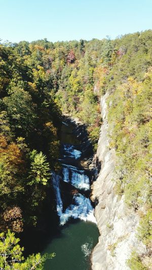 Tree Nature Outdoors Beauty In Nature Tallulah Gorge Water Green Color Nature