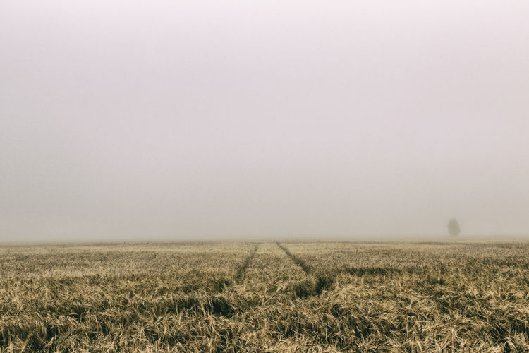 Crop growing on field during foggy weather