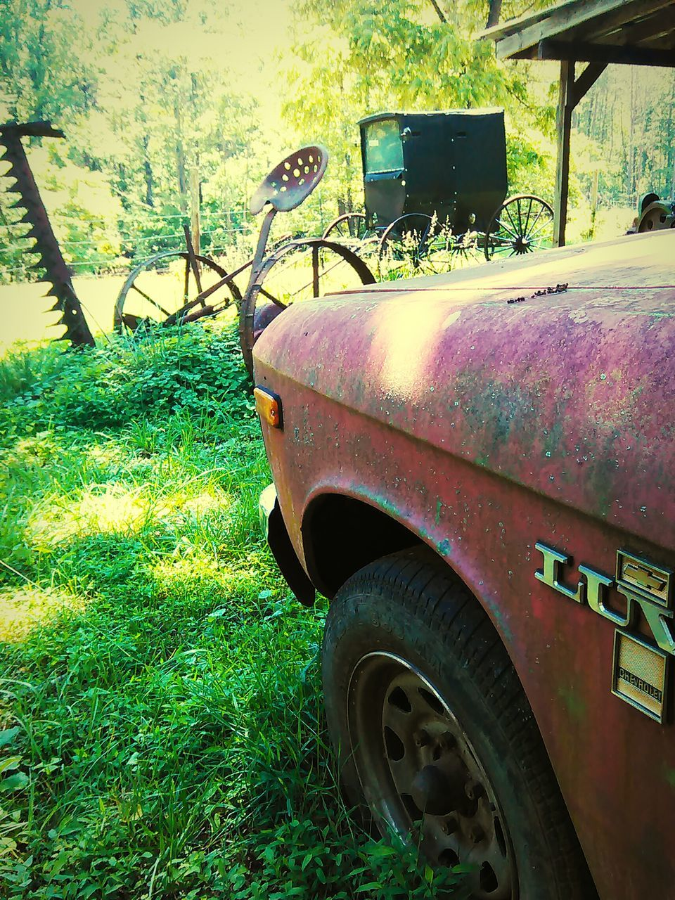 car, transportation, land vehicle, grass, rusty, field, day, obsolete, tree, damaged, green color, abandoned, mode of transport, no people, outdoors, plant, nature, stationary, growth