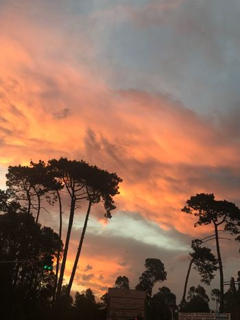 Nofilter#noedit Tree Sunset Sky Cloud - Sky Silhouette Orange Color Dramatic Sky Beauty In Nature Palm Tree No People Nature Outdoors Growth Low Angle View Scenics Built Structure Architecture Building Exterior Day