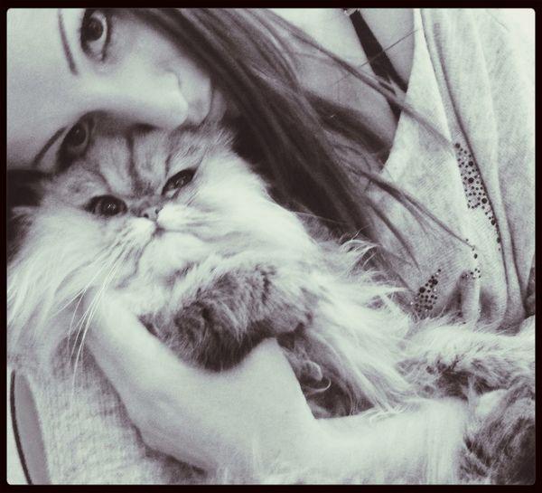 Lovemycat