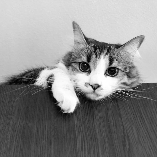 Close-up portrait of cat on floor