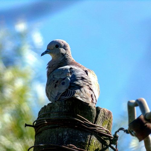 Low angle view of bird perching against sky
