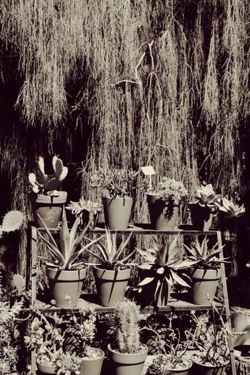 BosquesdePalermo Nature Day Vintage Photo