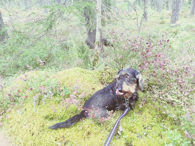 Dog One Animal Pets Animal Themes Outdoors Domestic Animals No People Labrador Retriever Mammal Day Black Labrador Nature Grass Tree Retriever