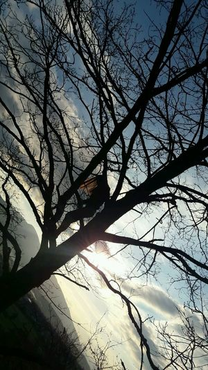 Tree Low Angle View Nature Sky Day No People Beauty In Nature Freedom Free Spirit Pain Naturephotography
