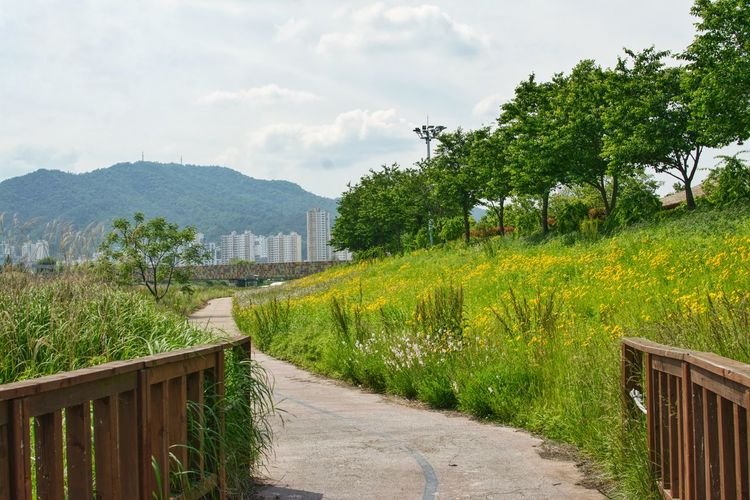 Footpath amidst plants and trees against sky