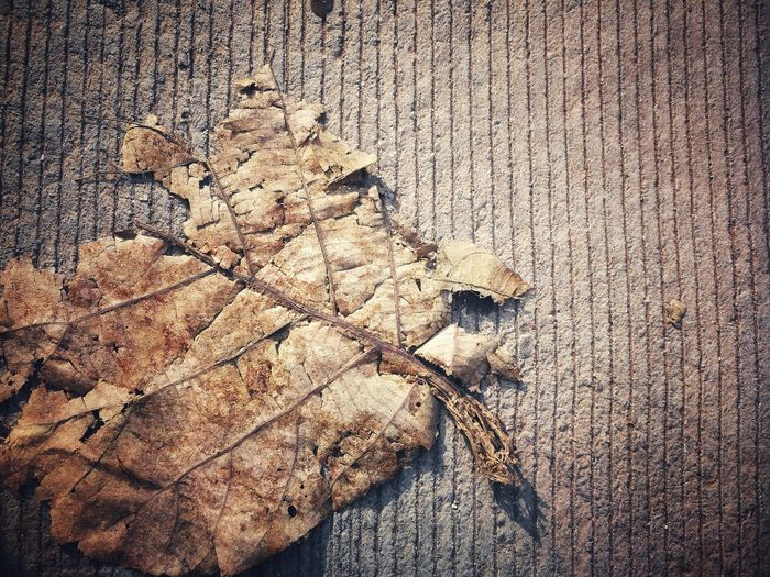 Dead leaf Dry