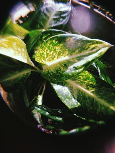 Close-up of green leaves in water