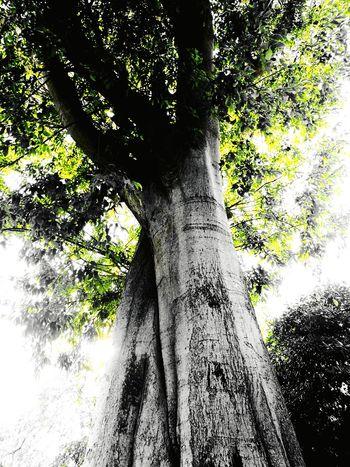 Tree Nature Livorno Italy EyeEmNewHere Huawei P9 Leica