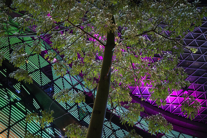 Beauty In Nature Branch Building Lights Fragility Freshness Growth Low Angle View Nature Night No People Outdoors Street Lights Tree