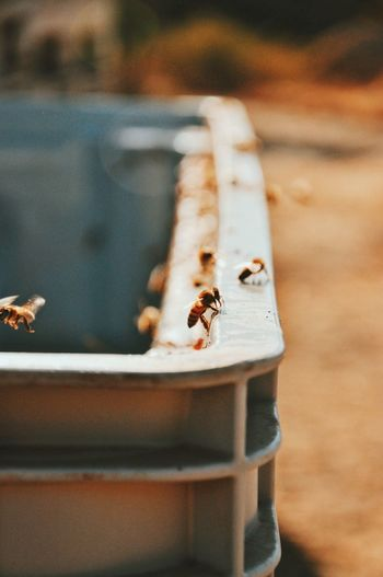 Bee Insect Animals In The Wild Animal Themes Animal Wildlife One Animal No People Day Outdoors Nature Close-up