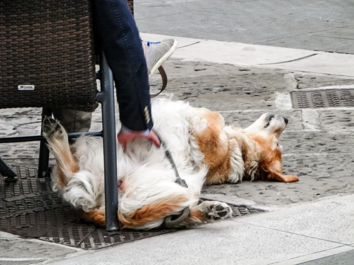 Love Cuddling Cuddles Dog Outside Waiting Trieste Italia Italy Taking Photos Showcase March No Filters  From My Point Of View Walking Around Streetphotography In The Street Close-up Animals Animal Gettyimages Getty Images Getty & Eyeem Things I Like 43 Golden Moments