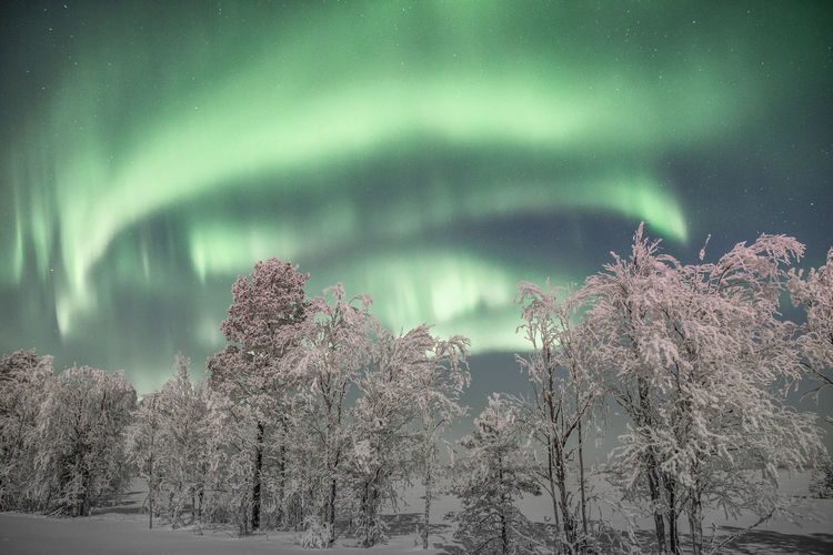 Arctic night and Northern Lights show Beauty In Nature Tree Tranquility Tranquil Scene Winter Nature Snow Sky Outdoors Arctic Landscape Night Nature_collection Aurora Borealis Northern Lights Travel Freshness Scenics Green Color Exploring Lapland Check This Out Low Angle View Astronomy Illuminated