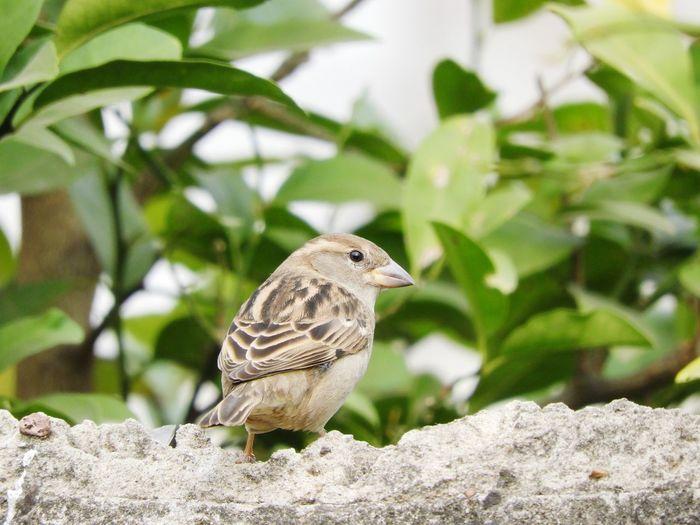 Bird Bird Of Prey Perching Tree Owl Full Length Branch Sunny Close-up Sky
