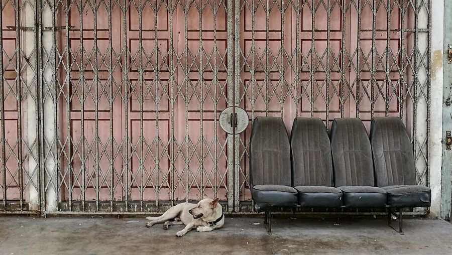 Dog relaxing by empty seats against gate