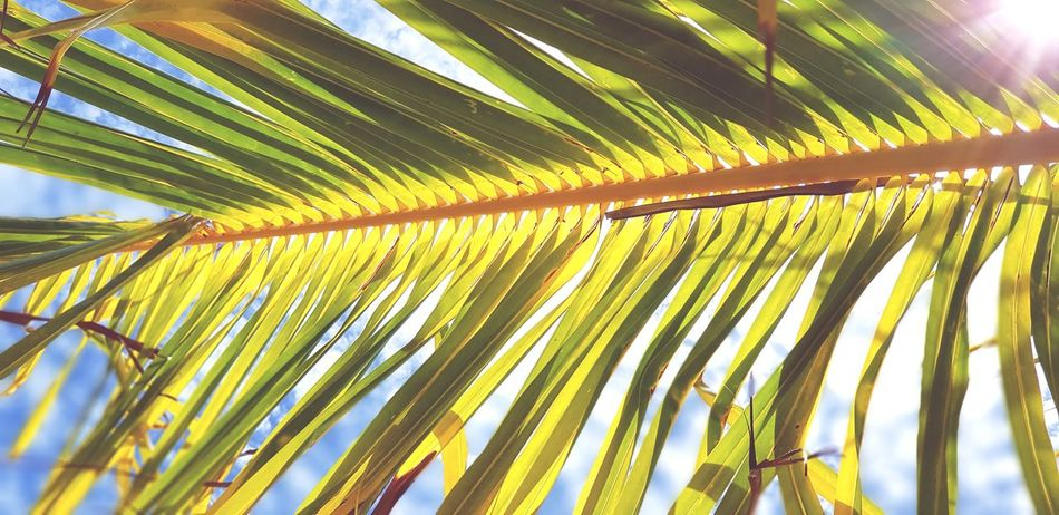 Sous l'ombre d'un cocotier Tree Palm Tree Frond Leaf Palm Leaf Sky Close-up Green Color First Eyeem Photo