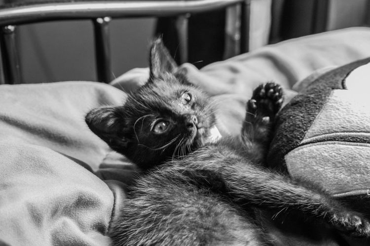 Time to rise already? Cat Kitty EyeEm Nature Lover Animals Catoft EyeEm Cats Relaxing Chilling Wakeup Blackandwhite Black And White Blackandwhite Photography Good Morning God Bless Gods Creation Bedroom