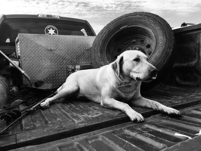 Dog Canine