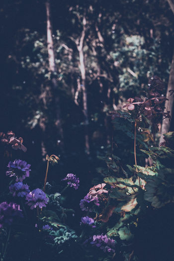 Nature Plant Beauty In Nature Tree Scenics No People Forest Outdoors Spring Growth Garden Mystical Flowers Purple Flower Buds Trees Shallow Depth Of Field Pink Color Plant Nature Flower Blurred Background Light And Shadow