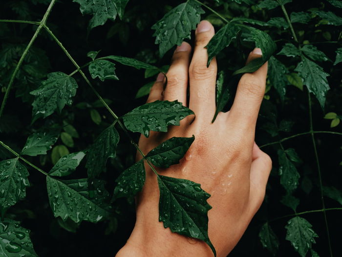Close-up of hand touching green leaves