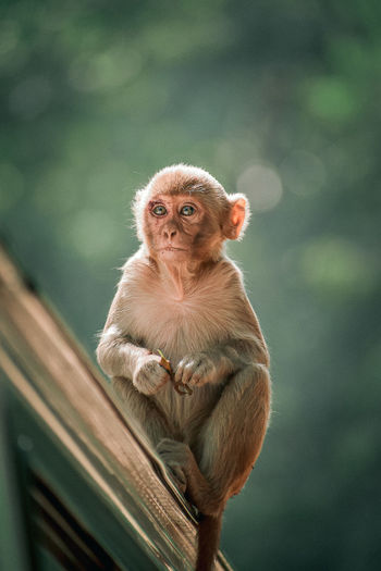 Portrait of monkey sitting on car outdoors