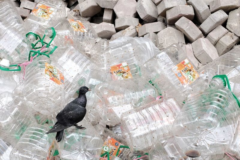 High angle view of birds in plastic