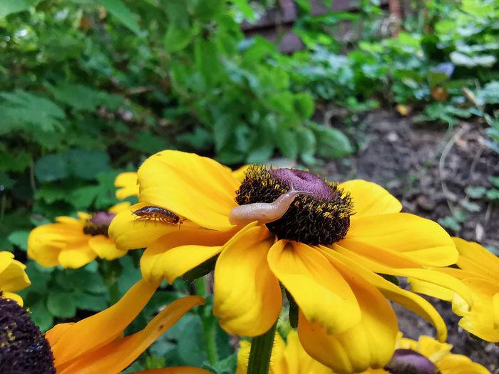 Slug Flower
