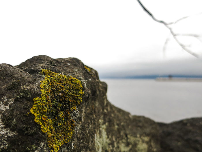 Lichen Boardwalk Limited Depth Of Field Nature