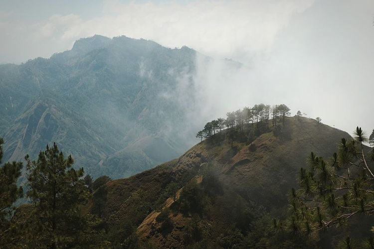 Scene from Bakun, Benguet Pinaceae Pine Woodland Tree Forest Pine Tree Fog Landscape Mountain Travel Hiking Nature Beauty In Nature Arrival Social Issues Cloud - Sky Outdoors No People Natural Parkland Day Rural Scene Travel Destinations Tranquil Scene Mountain View Hiking Benguet The Great Outdoors - 2017 EyeEm Awards