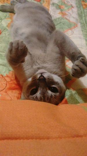 Cat♡ Gatubela 🌚