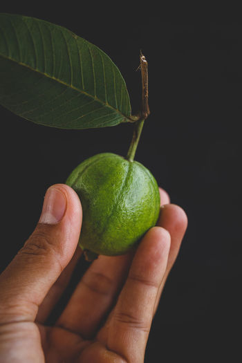 Cropped image of person holding guava