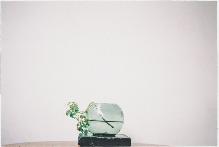 I shoot film. Minimalist The Week on EyeEm Film Photography Filmisnotdead Freshness Glass Glass - Material Hoang Ann Leaf Minimal Nature No People Plant Plant Part Single Object Table White Background