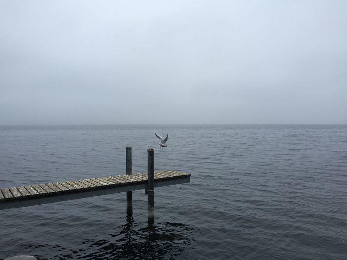 Gull Gulls In Flight Water Lakeshore Scenics Foggy Lake Of Zug Horizon Over Water Tranquil Scene Outdoors No People Grey Lake Switzerland Mystic Mystical Atmosphere Boardwalk Grey Water Grey Day