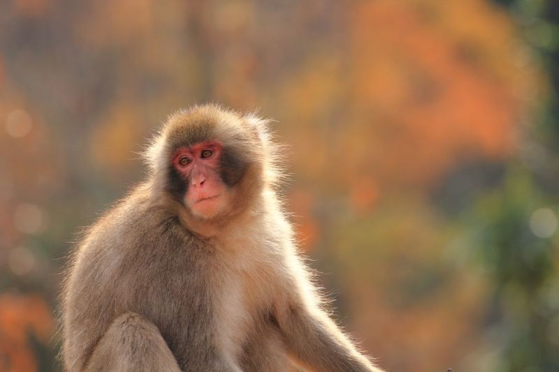 Close-up of monkey looking away outdoors