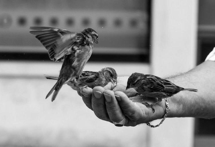 Birds in the hand Birds Birds Feeding Birds In The Hand Bird In The Hand Feeding The Birds Black And White Leica Leica Monochrom
