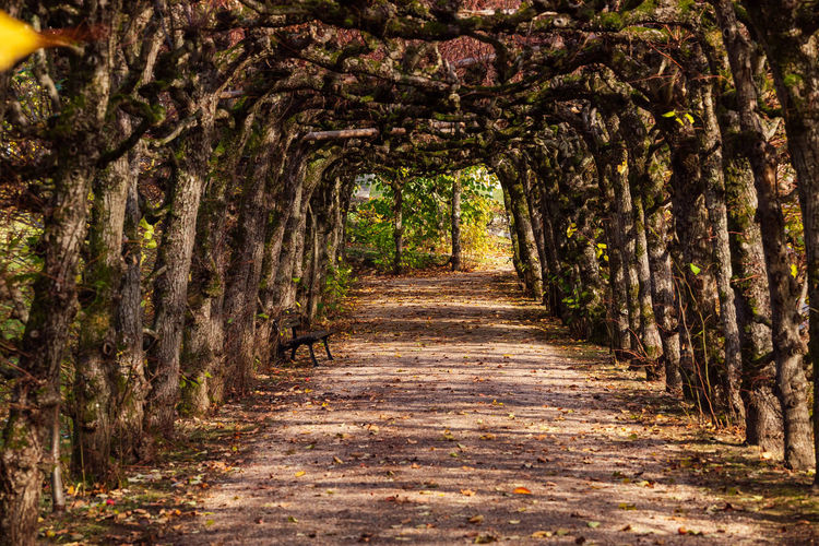 footpath amidst trees in forest Beauty In Nature Day Diminishing Perspective Direction Empty Footpath Forest Growth Land Nature No People Nusshain 10 18 Oktober Outdoors Plant The Way Forward Tranquil Scene Tranquility Tree Tree Canopy  Tree Trunk Treelined Trunk Autumn Mood