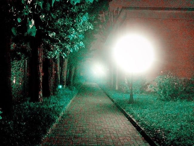 Down by the path. Peace And Quiet Peaceful Misty Night Light Walking Around Green BEIJING北京CHINA中国BEAUTY University Campus