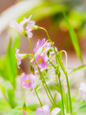 Keep close to Nature's heart... and break clear away, once in awhile, and climb a mountain or spend a week in the woods. Wash your spirit clean. Flower Head Flower Defocused Pink Color Petal Uncultivated Springtime Close-up Plant Grass