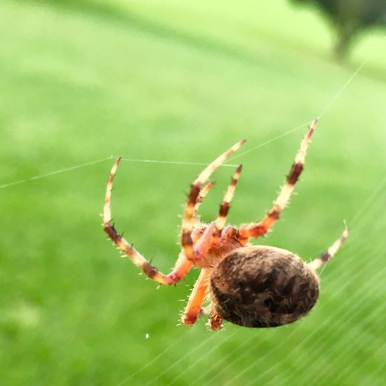 EyeEm Selects One Animal Animal Themes Spider Spider Web Animals In The Wild Insect Animal Wildlife Focus On Foreground Close-up Nature Day No People Outdoors Animal Leg Fragility Beauty In Nature