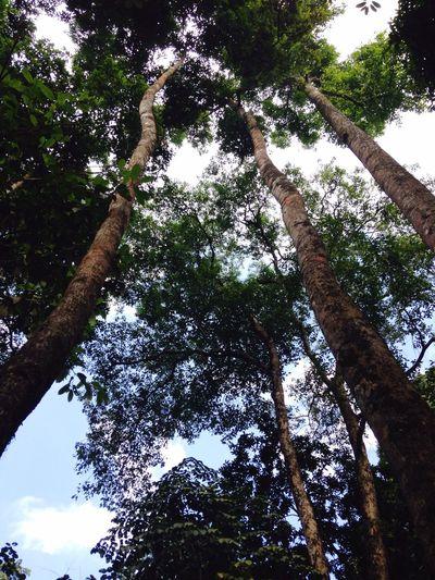 Three Tree. Tree Nature