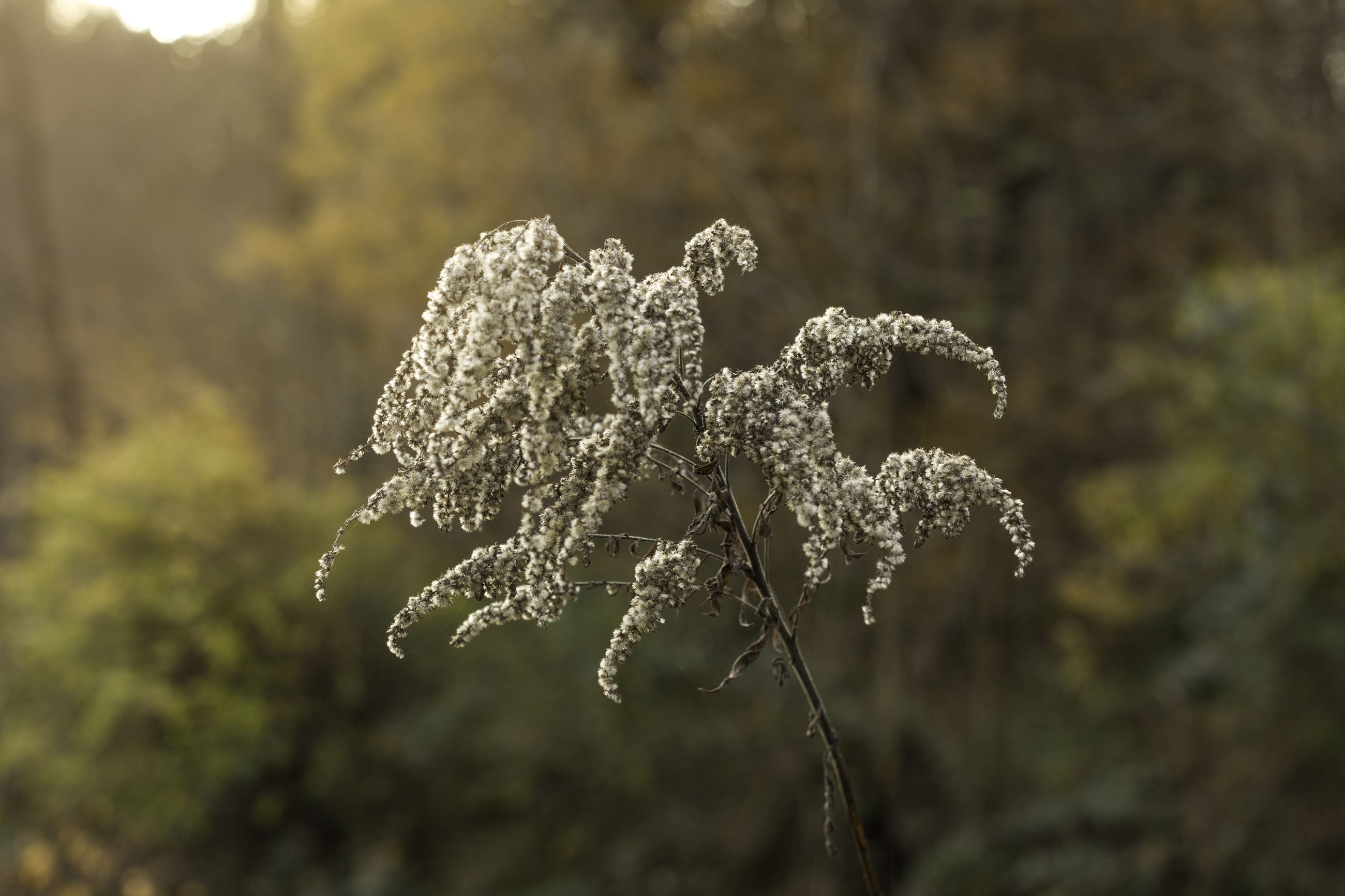 nature, growth, beauty in nature, close-up, no people, outdoors, plant, cold temperature, day, fragility, freshness
