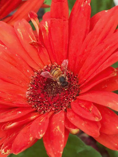 Lowes Beauty In Nature Flower Flower Head Bee