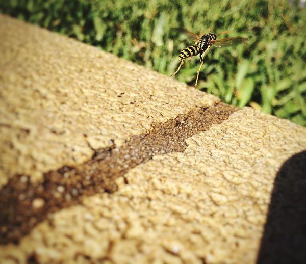 Hornet First Eyeem Photo