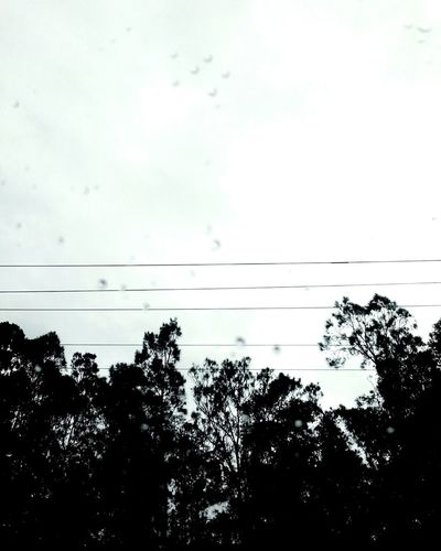 Raining ... Gloomy Raindrops Tree Reflection Nature Sky No People Tranquility Cloud - Sky Bird Outdoors Water Beauty In Nature Day Desaturated