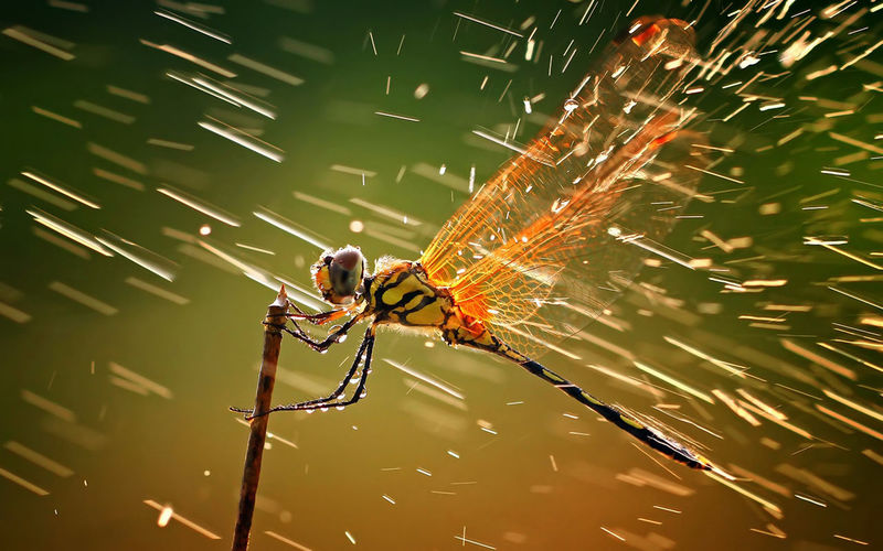 Close up of dragonfly and waterdrops