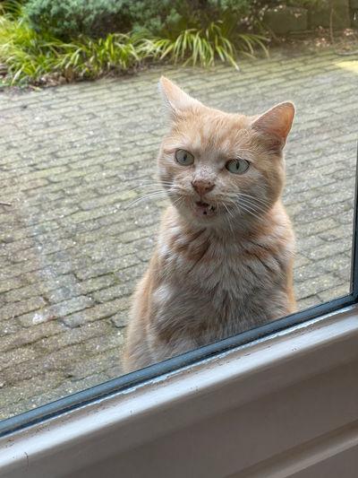 Portrait of cat seen through window