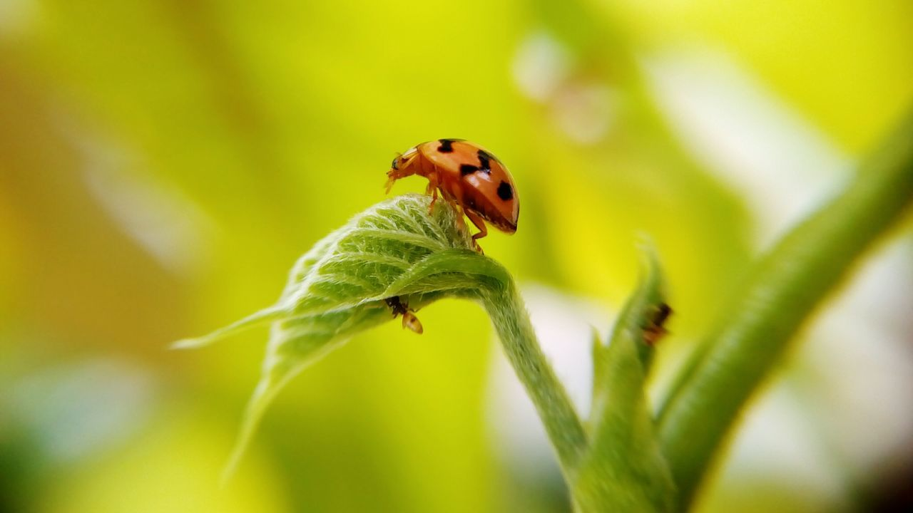 insect, animal themes, animals in the wild, nature, one animal, plant, green color, leaf, growth, close-up, no people, fragility, day, outdoors, beauty in nature, ladybug, freshness