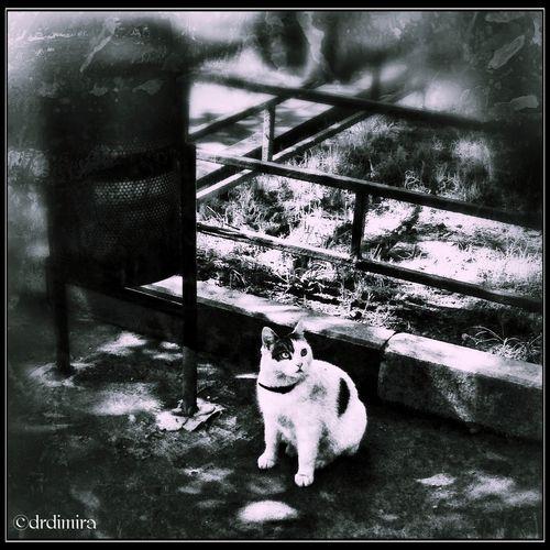 Photo Morgana DO YOU WANNA PLAY WITH ME?.. Blackandwhite Dark Photomorgana